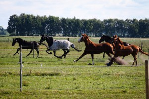 20150621-inga turnier,fohlen ,pony juni 2015 050