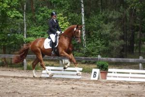inga turnier,fohlen ,pony juni 2015 010
