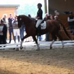 Pferde der Elbmarsch
